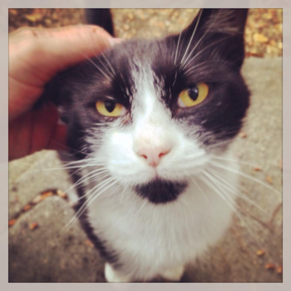 Katzenblogger
