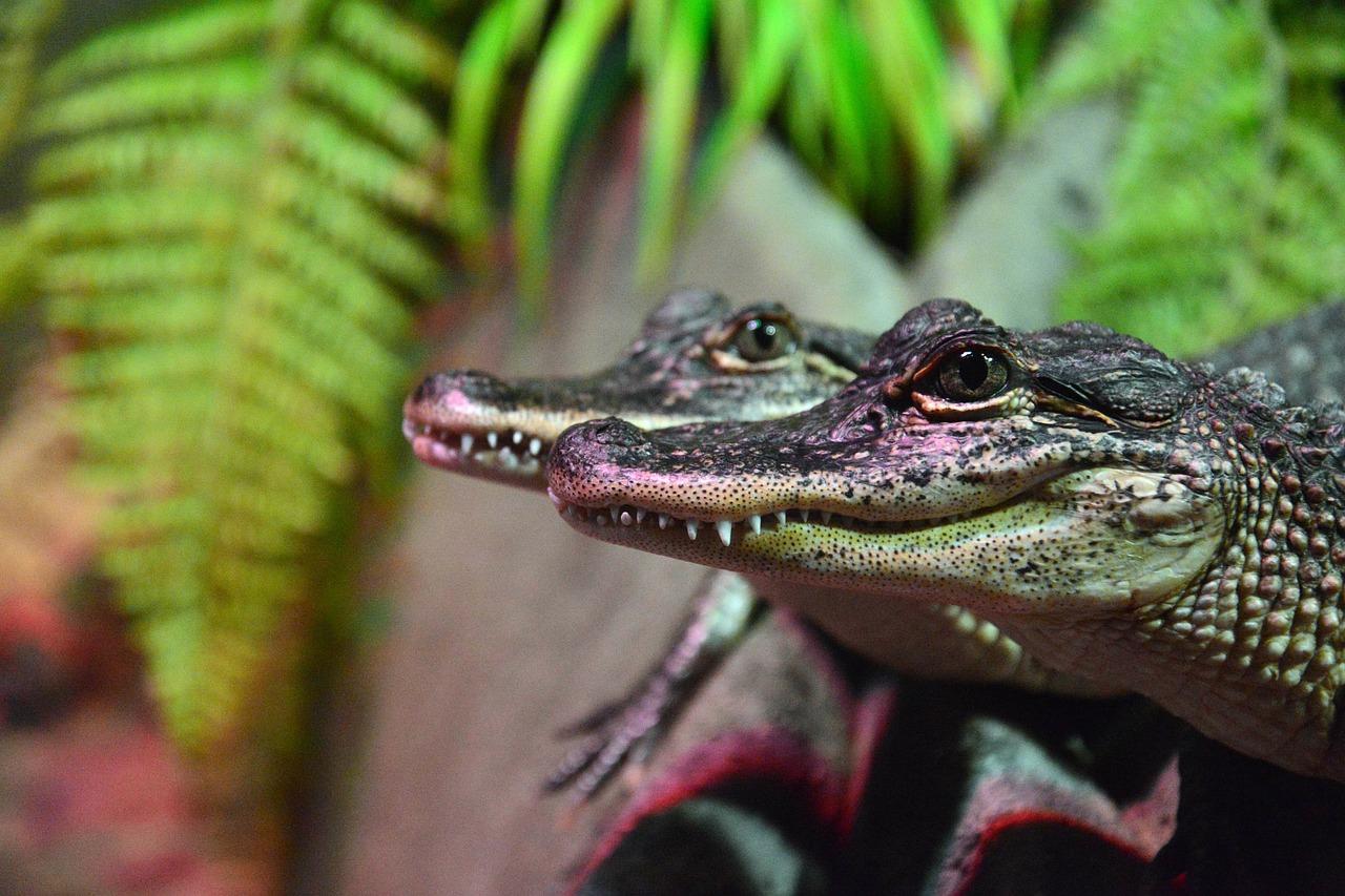 Krokodile Pixabay