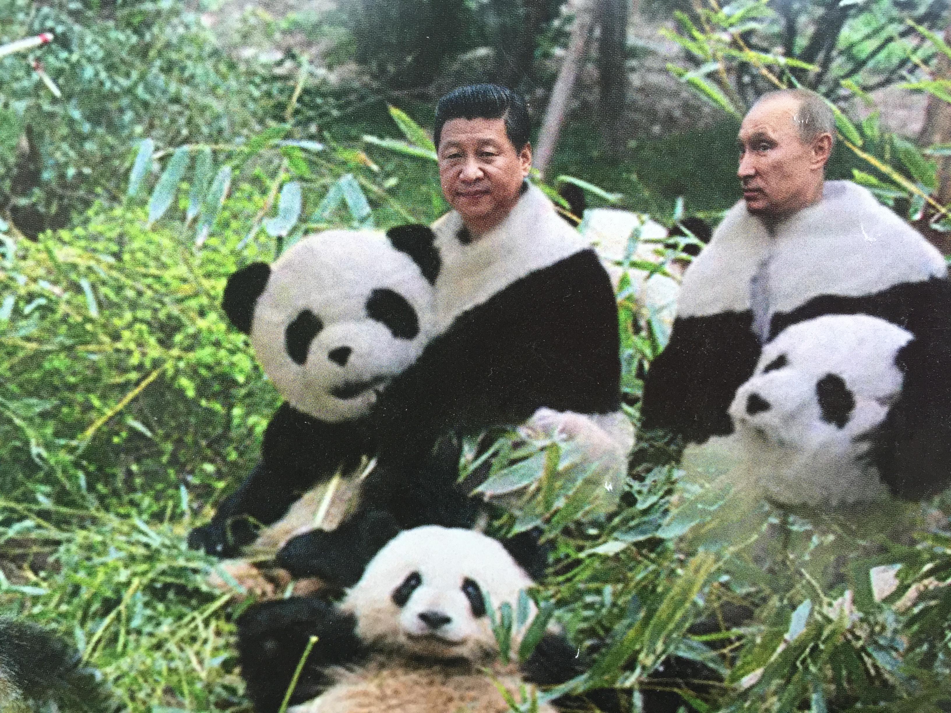Putin der Woche Panda