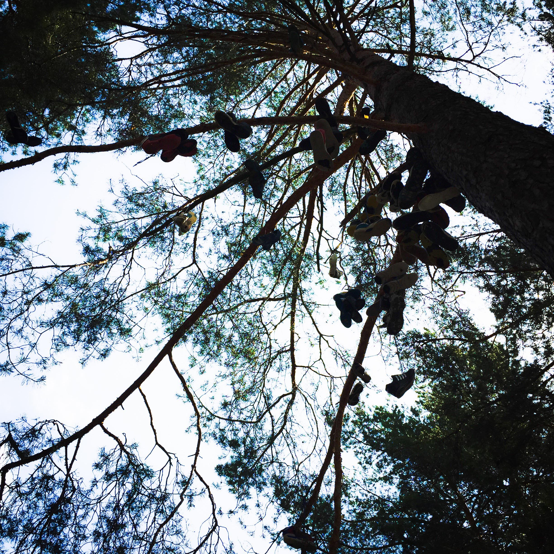 Slawutytsch Baum