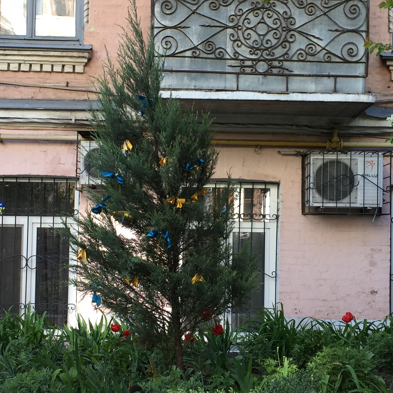 Kiew Baum