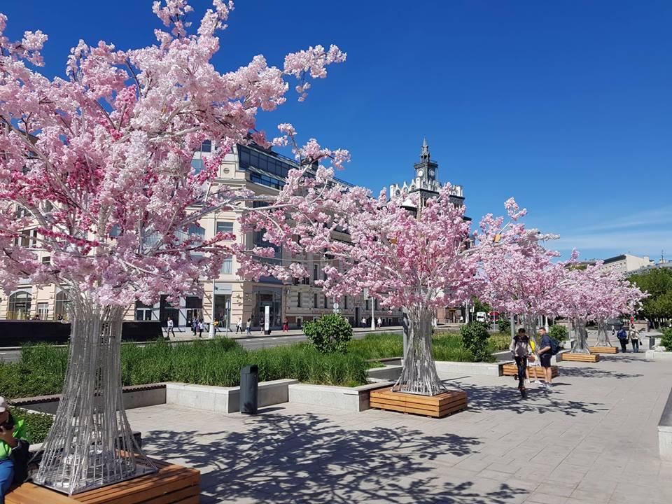 kscheib moskau künstliche Kirschbäume leute