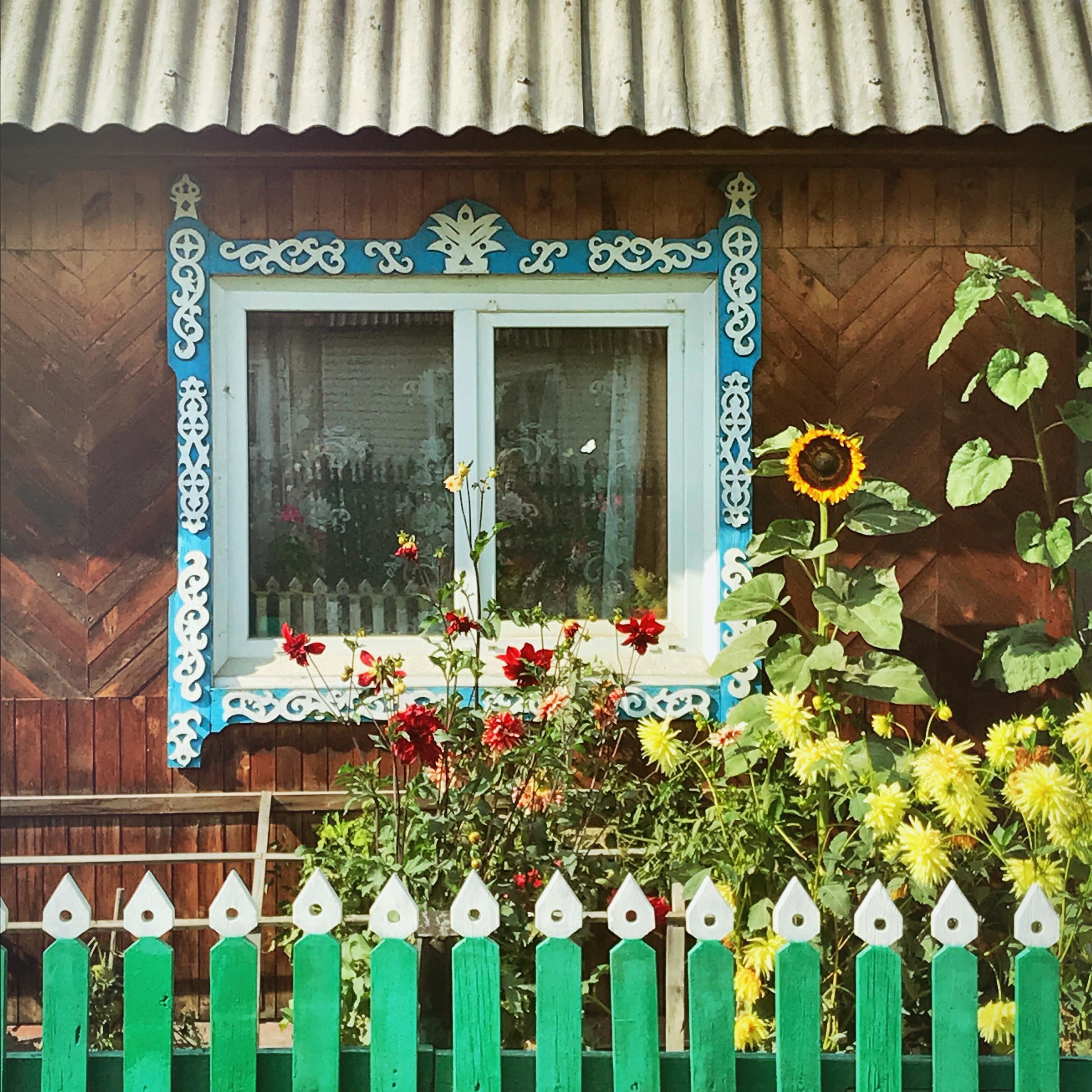 Sibirien Holzhaus Fenster Sonnenblumen