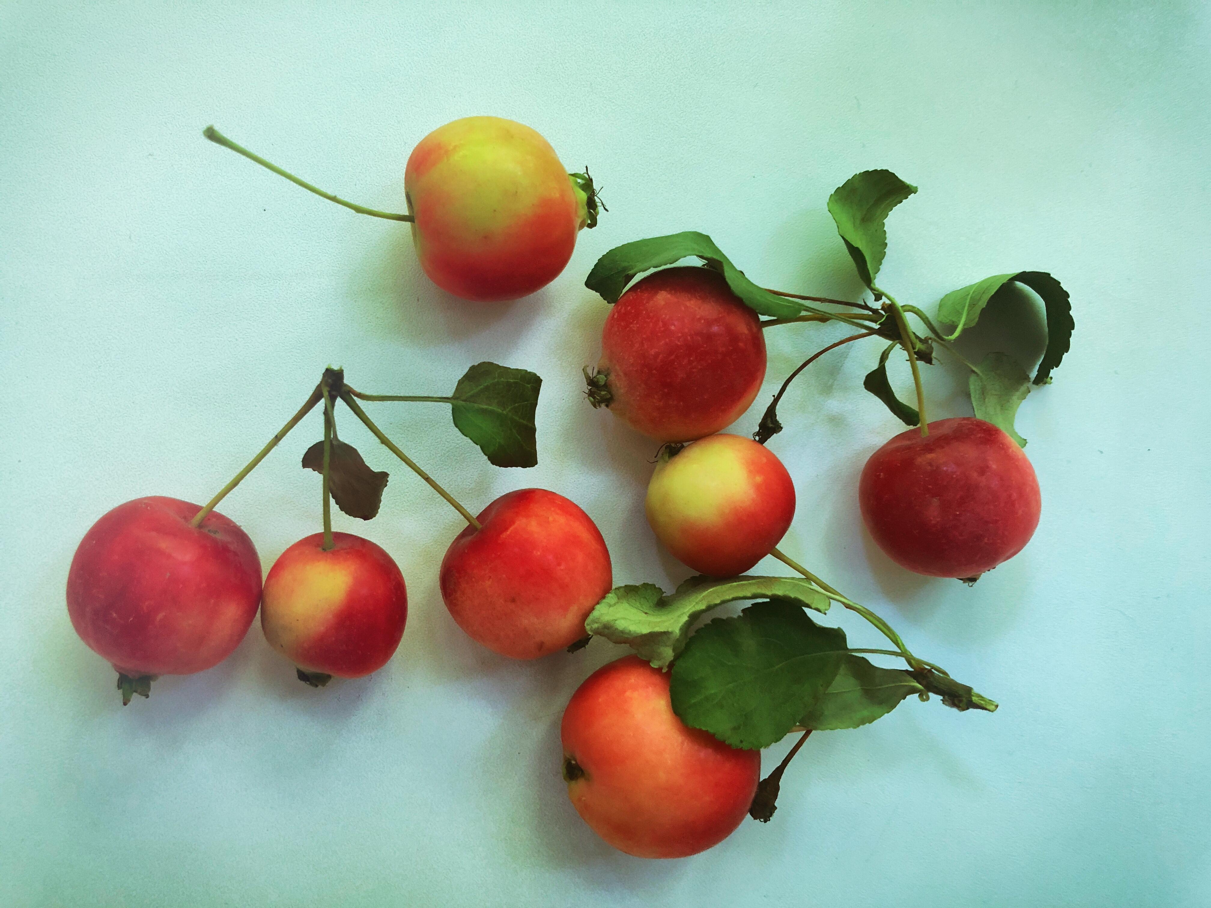 tomsk sibirien aepfel